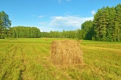 在草堆里翻滚在领域的 库存图片