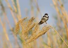 在草射击的导线被盯梢的燕子 免版税图库摄影