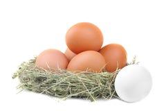 在草巢的鸡红皮蛋  查出 库存照片