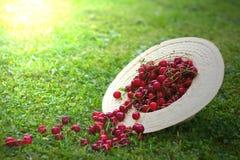 在草帽的新近地被采摘的成熟樱桃 库存照片