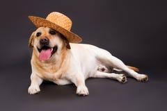 在草帽的逗人喜爱的拉布拉多猎犬 免版税库存图片