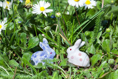在草掩藏的复活节兔子 免版税库存照片