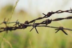 在草掩藏的生锈的铁丝网 免版税库存图片