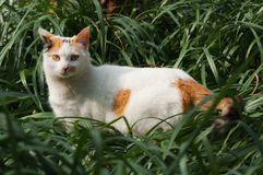 在草灌木的蓬松猫 图库摄影