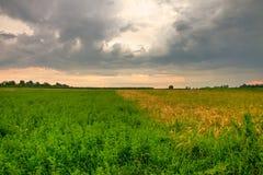 在草甸上的惊人的日落 免版税库存图片