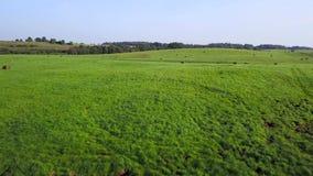 在草甸中间的小沼泽 航测 股票视频