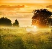 在草甸和树中的土路在早晨薄雾 免版税库存照片