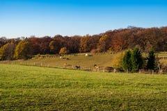 在草甸和森林,马的看法在秋季风景的,埃森一个小牧场吃草 免版税库存照片