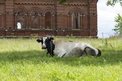 在草甸威胁c说谎在草的被察觉的皮肤,在后 免版税库存图片