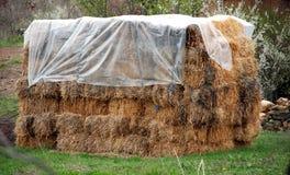 在草甸收集的干草 免版税图库摄影