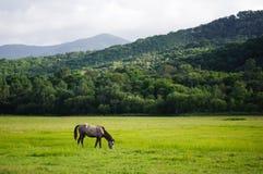 在草甸的一匹马 免版税库存照片