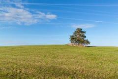 在草甸的一棵孤立树 早晨飞机天空和结露踪影  免版税图库摄影