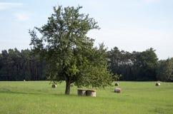在草甸的一棵孤立树 免版税图库摄影