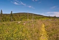 在草甸的供徒步旅行的小道有在Jeseniky山的Temna小山的 免版税库存图片