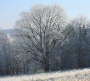 在草甸的偏僻的树在12月早晨 库存照片