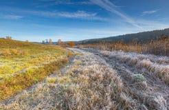 在草甸的冷的早晨有在植物的树冰的 免版税库存照片