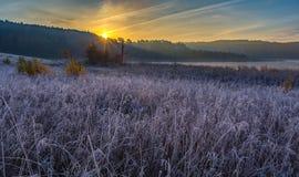 在草甸的冷的早晨有在植物的树冰的 免版税图库摄影
