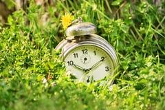 在草甸的古板的时钟 免版税库存图片