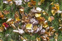 在草甸的叶子 免版税库存照片