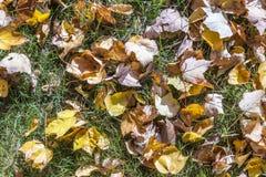 在草甸的叶子 免版税库存图片