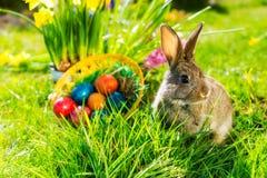 在草甸的复活节兔子有篮子和鸡蛋的 库存图片