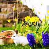 在草甸的复活节兔子有篮子和鸡蛋的 图库摄影
