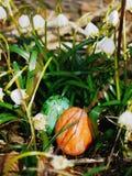 在草甸的复活节彩蛋有snowdrops的 免版税库存照片