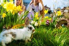 在草甸的复活节兔子有篮子和鸡蛋的 库存照片
