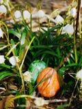 在草甸的复活节彩蛋有snowdrops的 库存照片