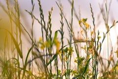 在草甸的夏天花日落的 免版税库存照片