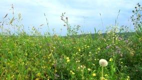 在草甸的夏日