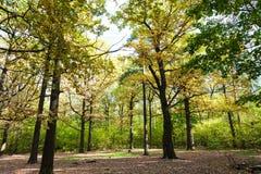 在草甸的太阳照亮的橡木树丛在森林里 库存照片