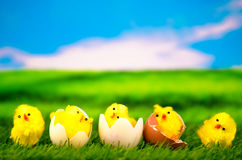 在草甸的小鸡-复活节快乐 免版税库存图片