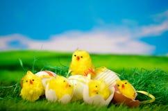在草甸的小鸡-复活节快乐 免版税图库摄影