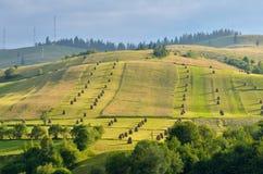 在草甸的干草堆 免版税图库摄影
