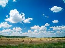 在草甸的干草捆 库存照片
