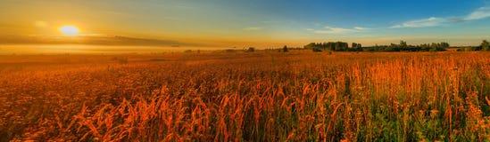 在草甸的日出,全景 免版税图库摄影