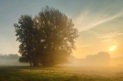 在草甸的日出 库存照片