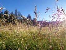 在草甸的日出 库存图片