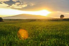 在草甸的日落光 免版税图库摄影