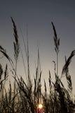 在草甸的日落 免版税图库摄影