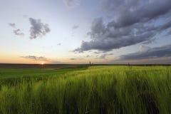 在草甸的日落 库存图片