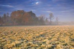 在草甸的早期的有薄雾的早晨 免版税库存图片