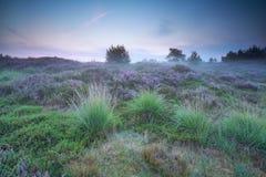 在草甸的有薄雾的夏天日出有石南花的 图库摄影