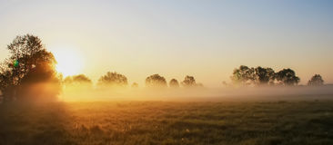 在草甸的有薄雾的早晨 免版税库存照片