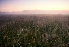 在草甸的有雾的早晨。日出风景。 免版税库存图片