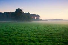 在草甸的有雾的早晨。日出风景。 免版税库存照片