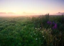 在草甸的有雾的早晨。日出风景。 库存图片