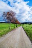 在草甸的树与太阳和薄雾的日落的 免版税库存照片