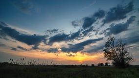 在草甸的树在晚上 免版税库存图片